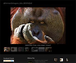 Fotografias de Animais Selvagens em destaque no Animais Fotos