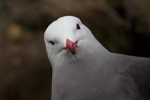 Gaivota | Aves - Fotos de Animais Selvagens que não esquecem (2/6)